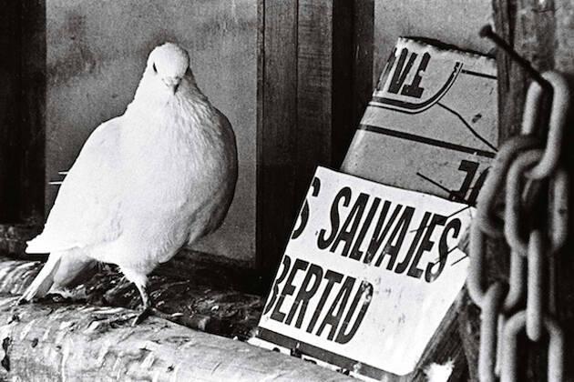 """Crédito: © Manuel López, """"Mini zoo en Brunete, Madrid, 1976"""". De la exposición antológica """"Manuel López 1966-2006"""",Paloma"""