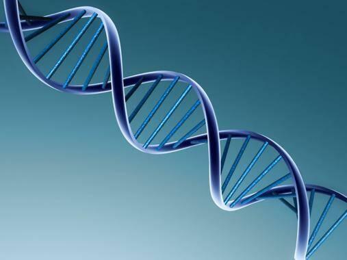 Google analiza genomas y los pone a disposición de los científicos.,