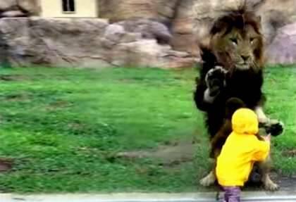 Captura del video en youtube,Niño león, zoo Japón