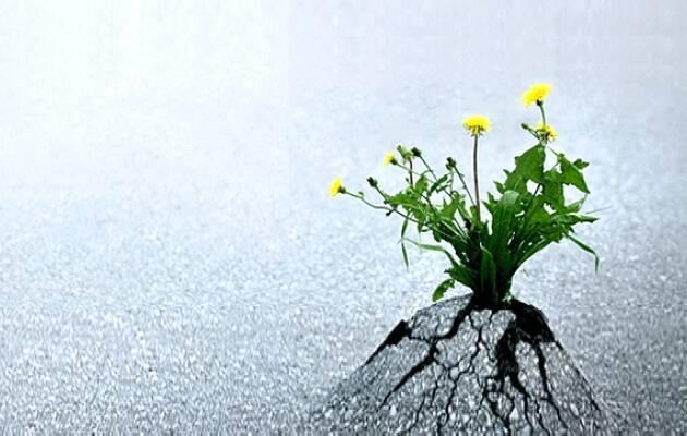 ,planta milagrosa, milagro