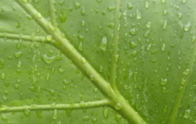 ,hoja planta, hoja agua