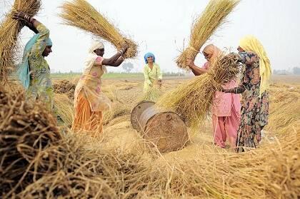 Mujeres trabajando en una zona rural de India. / Ciat (Flickr, CC)