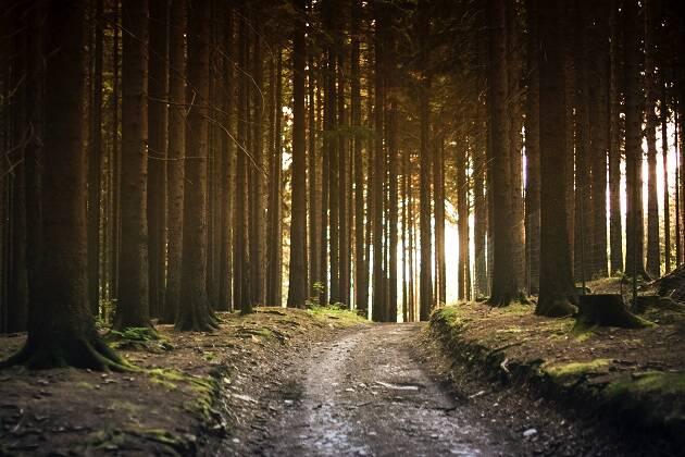 Un bosque. / Elke Karin Lugert (CC),