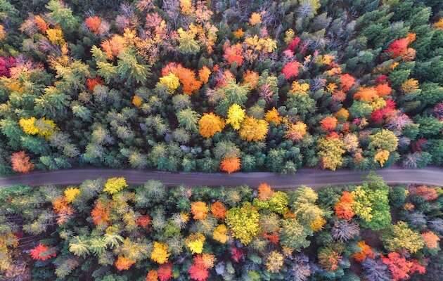 Aaron Burden / Unsplash,bosque dron, otoño árboles