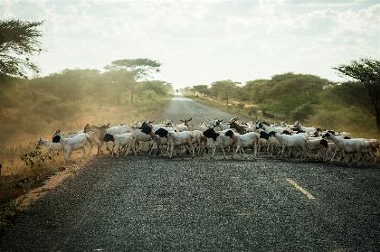 Carretera en dirección a Garissa. Foto representativa. / Puertas Abiertas