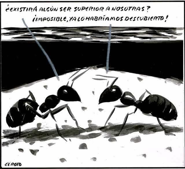 ,humor hormigas, humor Dios