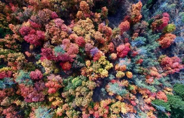 Bosque en otoño visto desde un dron / Layne Lawson, Unsplash,bosque otoño, bosque cenital