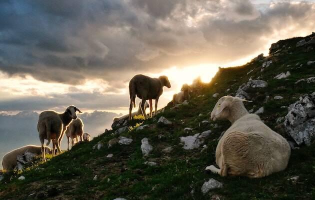 Photo by Jaka Škrlep on Unsplash,