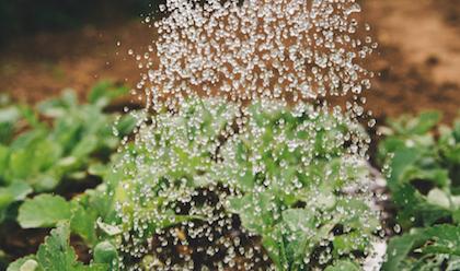 La industria agropecuaria acapara el 70% de la extracción de agua en el planeta. / Markus Spiske, Unsplash CC