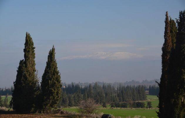 Los cipreses crecen abundantemente al norte de Galilea (Israel). Al fondo, pueden distinguirse entre la neblina las nieves perpetuas del monte Hermón. / Antonio Cruz.,