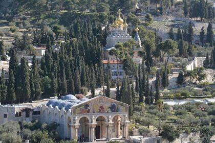En el huerto de Getsemaní, por encima de los viejos olivos, pueden verse numerosos cipreses.
