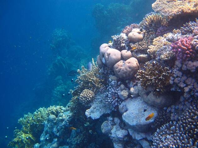 Arrecife coralino del mar Rojo, al sur de la península del Sinaí (Sharm El Sheik, Egipto), formado por cientos de especies diferentes. / Antonio Cruz,
