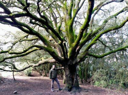 El autor junto a una encina emblemática (Quercus ilex), propia de los bosques del Mediterráneo occidental.