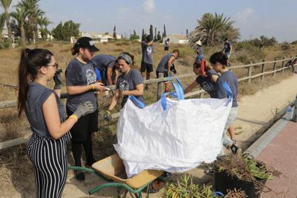 Voluntarios de las Jornadas Internacionales limpiando la playa de la planta invasora Uña de Gato. / Decisión