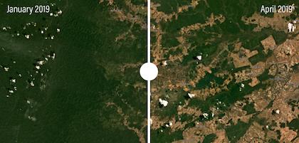 Imagen comparativa entre enero y junio de 2019 de la meseta brasileña de Roraima, después de los incendios en la zona. / Global Forest Watch Fires