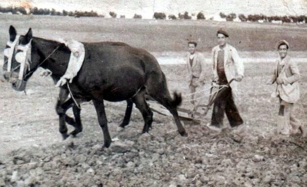 Cristobal García, arando en lo alto del Camino Majadahonda, año 1950. /El Saucejo, España,