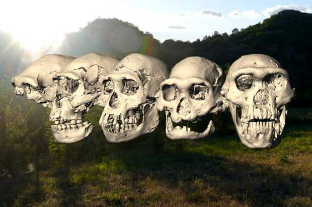 <p> Los cinco cr&aacute;neos humanos primitivos de Dmanisi (Georgia) / M. Ponce De Le&oacute;n, Ch. Zollikofer, Universidad de Z&uacute;rich</p> ,