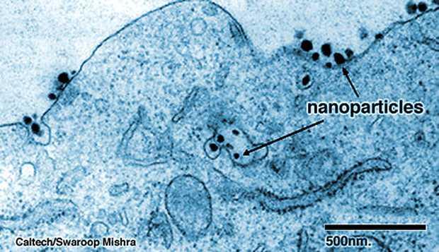 <p> Imagen del experimento con nanopart&iacute;culas contra el c&aacute;ncer</p> ,
