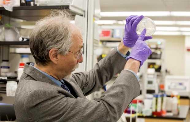 <p> Jef Boek, en el Instituto de Gen&eacute;tica de Sistemas, Universidad de Nueva York / El Mundo</p> ,